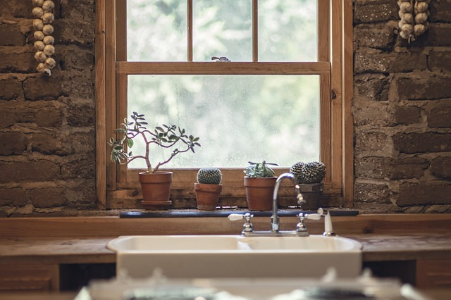 kaktusy v kuchyni